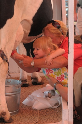 Milking a cow at the North Dakota State Fair